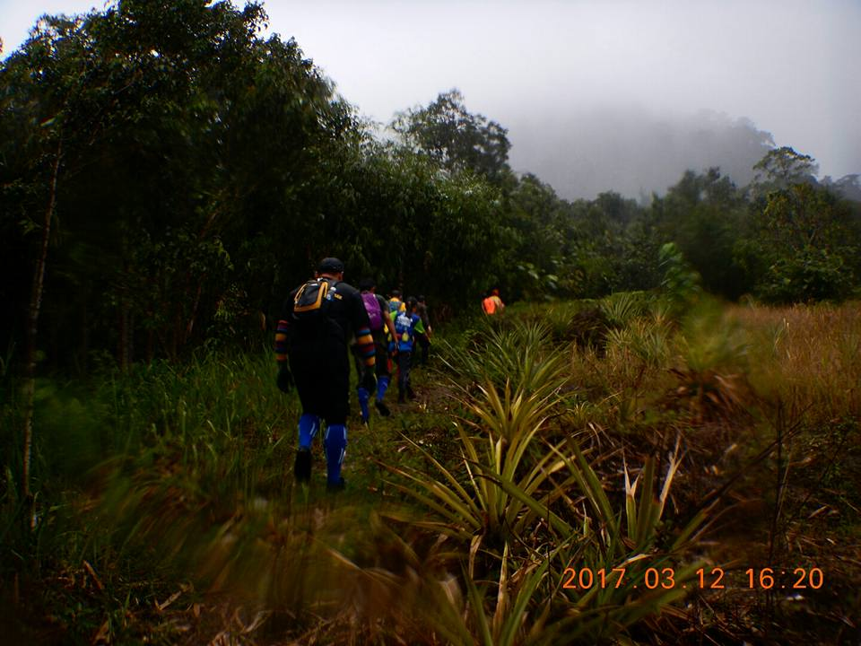 Image show Hashrunners in the jungle. Photo credit: Kota Padawan Hash House